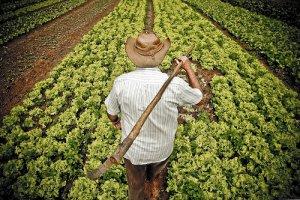 emprestimo-para-agricultor