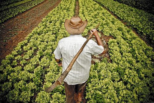 Mais de mil vereadores disputam reeleição na PB e maioria dos candidatos é agricultor