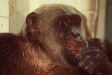 De Cacareco a Macaco Tião: eleitores votaram em animais desde os anos 50